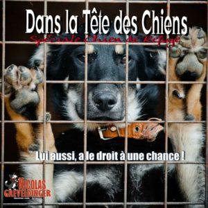 Éducateur canin vers Montévrain